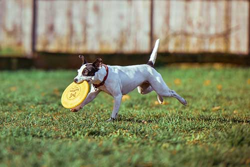 Doggie Daycare: Is Your Dog Getting Enough Exercise?