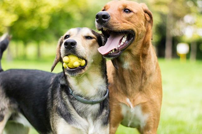 Secrets to Finding the Very Best Doggie Daycare
