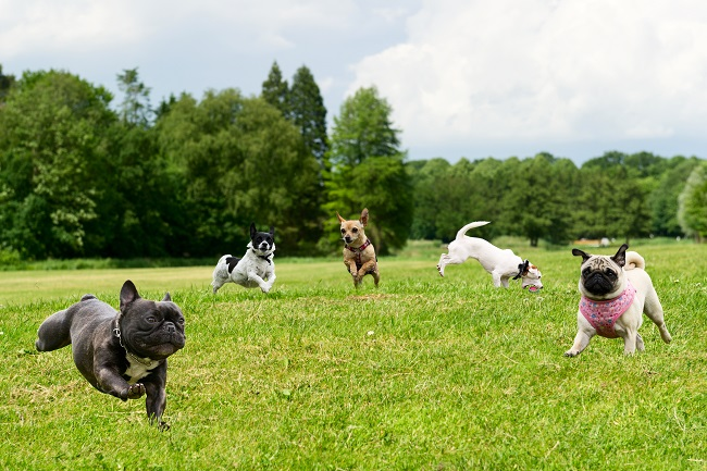 Dog Walker V. Dog Daycare: Which is Right For You?