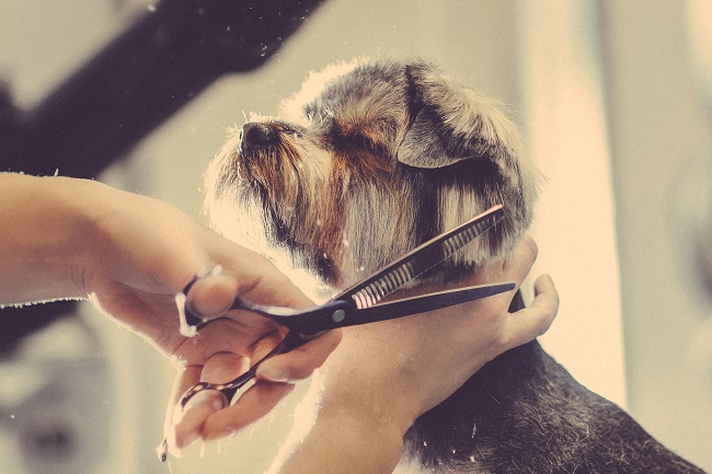 Dog Grooming Is More Than Fur Deep