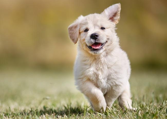 Happy Healthy Pup!