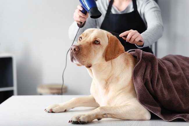 Steps to Make Pet Grooming a Great Experience for Your Puppy, Part I of II