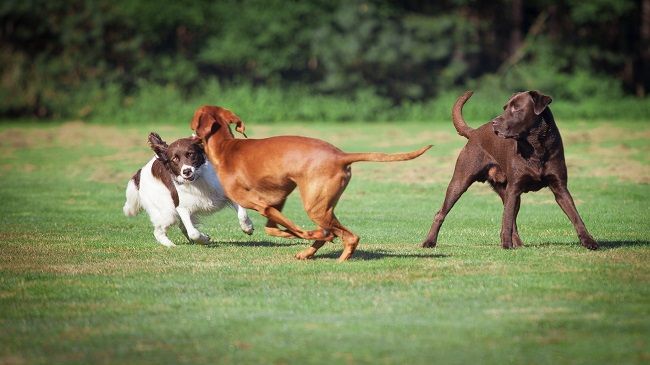 3 Reasons You Should Utilize Doggie Daycare