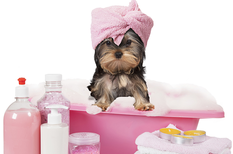 Steps to Make Pet Grooming a Great Experience for Your Puppy, Part II of II