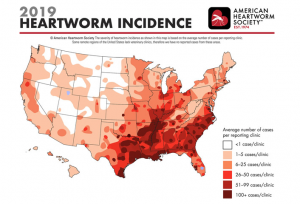 The dangers of heartworms